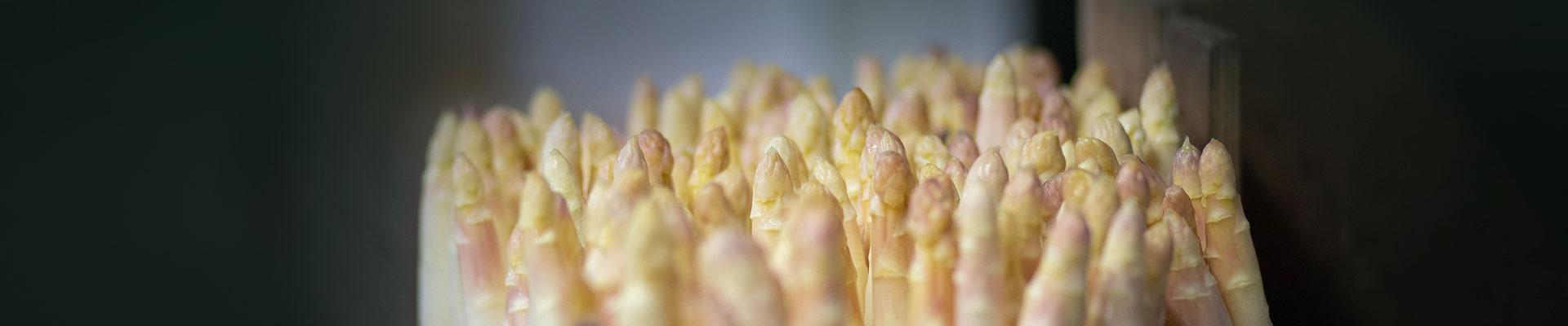 asperges-bandeau-contact