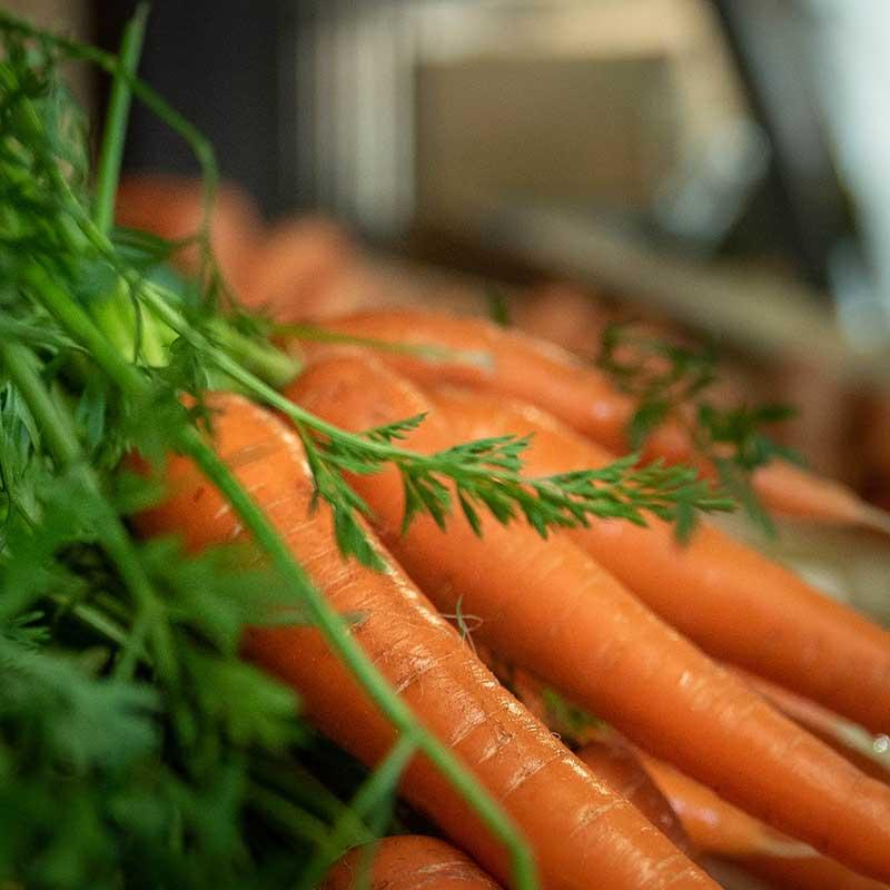 carotte-landes