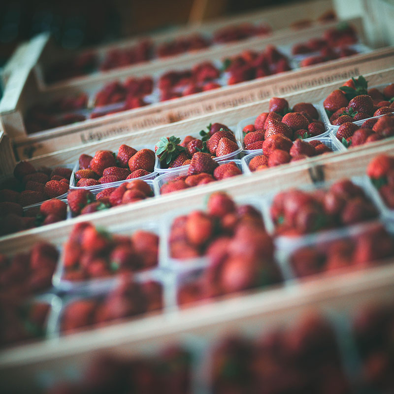 fraise-landes-03