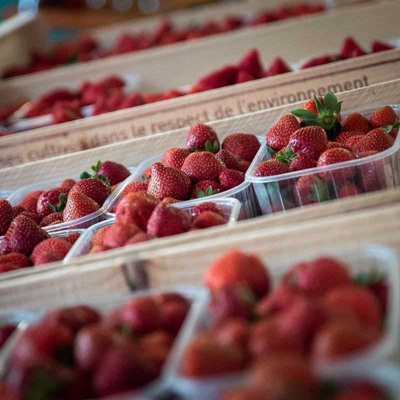 fraise-landes-04