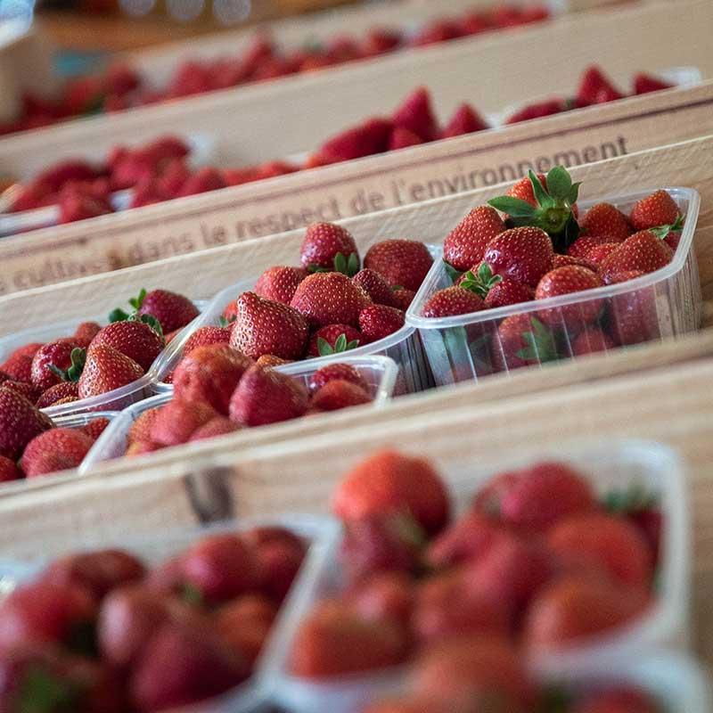 fraise-mathio-02