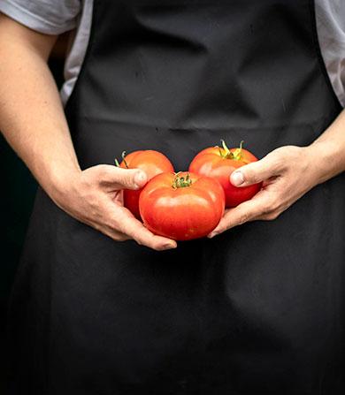 tomates-mathio-landes
